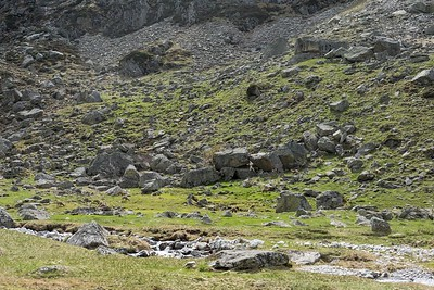 mai 2017, harde d'isards paissant sous la toue Labassa, Arrens-Marsous, Hautes-Pyrénées