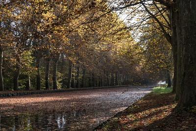 novembre 2016, derniers beaux jours sur le canal du Rhône au Rhin, Plobsheim, Bas-Rhin