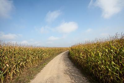 octobre 2014, dans les maïs, Eschau, Bas-Rhin