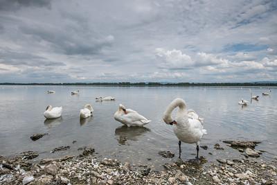 juillet 2014, plan d'eau de Plobsheim, Bas-Rhin