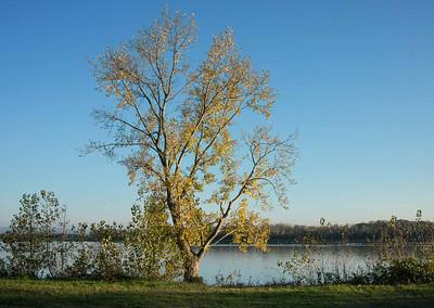 novembre 2013, plan d'eau Plobsheim (Bas-Rhin)