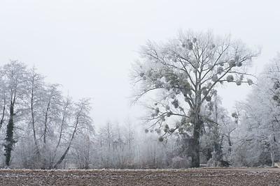 janvier 2017, Fegersheim, Bas-Rhin