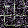 Blueberries for sale at organic farm store in Maryland.