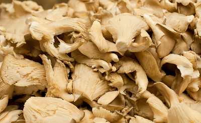 MID_OysterMushrooms_9192013