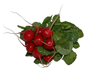 a small bunch of red radishes