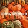 Heritage Pumpkins, Apple Hill