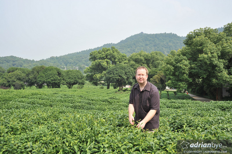 Me picking some tea for you to drink!
