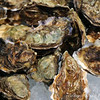 Tomales Bay Oysters 2016_4web3244