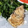Tomales Bay Oysters 2016_4web3248