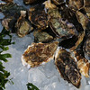 Tomales Bay Oysters 2016_4web3240