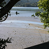 Tomales Bay Oysters 2016_4web3251