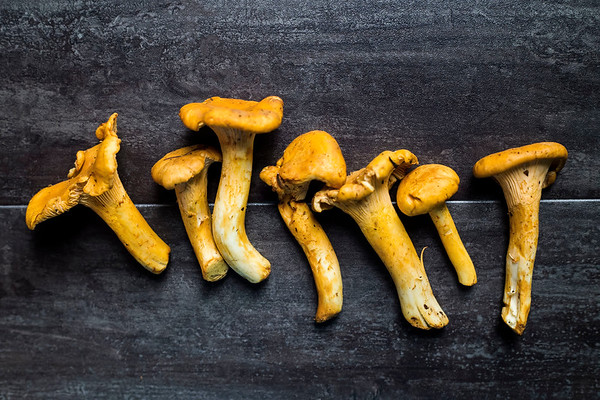 Dark rustic still life harvest of chanterelles mushrooms