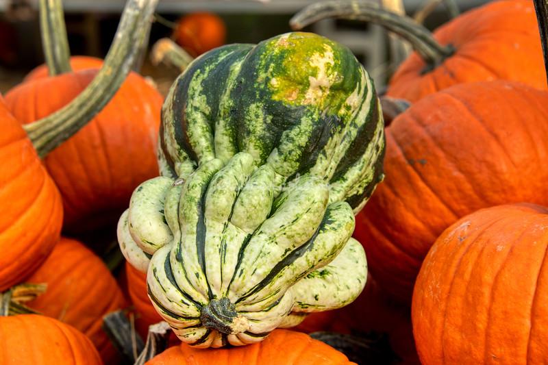 A gourd with pumpkins