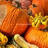 A crowned pumpkin
