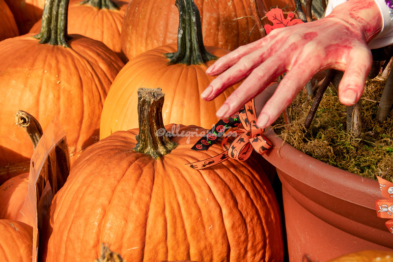 A disembodied hand in the pumpkin patch