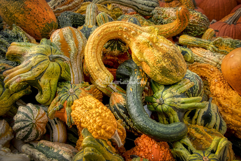 Mixed gourds