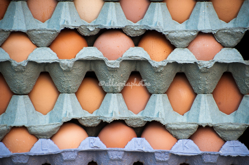 Cartons of eggs, Taunton, England