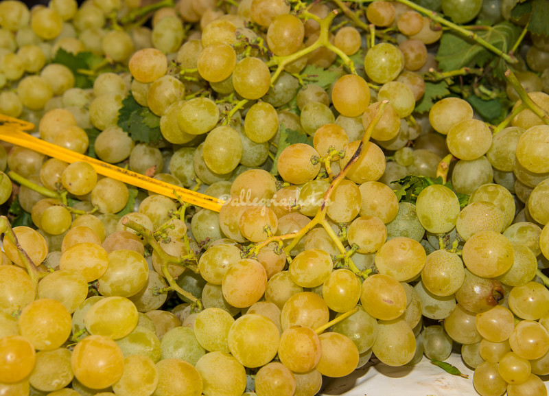 Bunches of green grapes, Rome