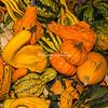 Autumn gourds, Campo dei Fiori, Rome