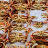 Dungeness Crab, Seattle