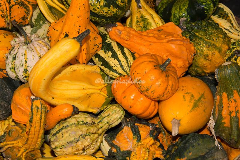 Autumn gourds and squash