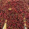 Bing cherries, San Francisco Farmers Market
