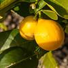Meyers Lemons, San Francisco