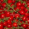 Red plum tomatoes, Rome, Campo dei Fiori