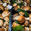 Porcini Mushrooms, Rome, Campo dei Fiori