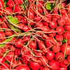 Bunches of red radishes