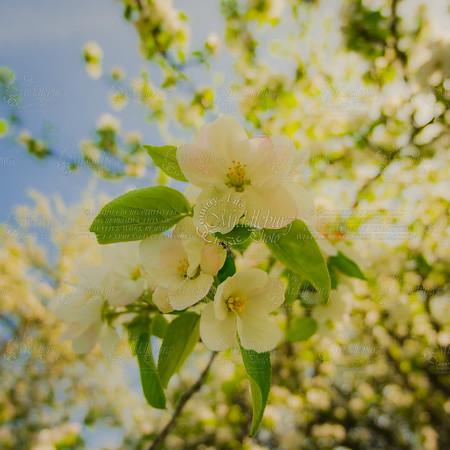 Spring in Unison
