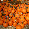 A pile of pumpkins