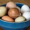 A bowl of farm fresh eggs from Ameraucana chickens