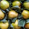 Holiday Pears at Metropolitan Market Seattle