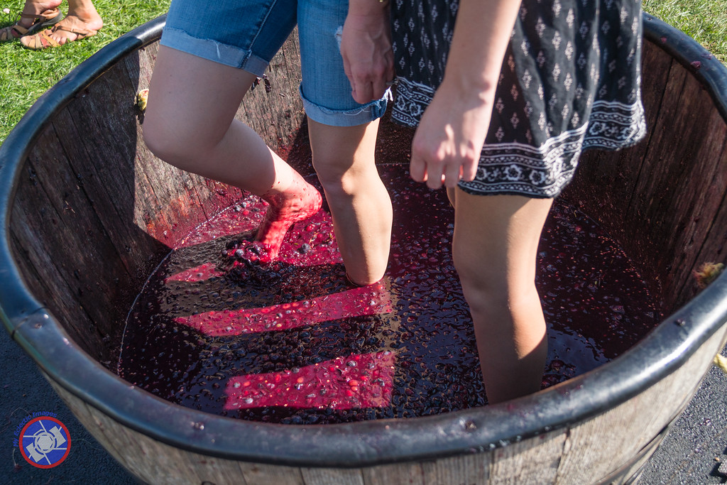 The Ancient Tradition of Stomping Grapes (©simon@myeclecticimages.com)