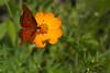 Botanical Gardens, Gainesville, Florida