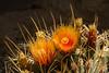 Cactus in the Desert Dome, Omaha Zoo