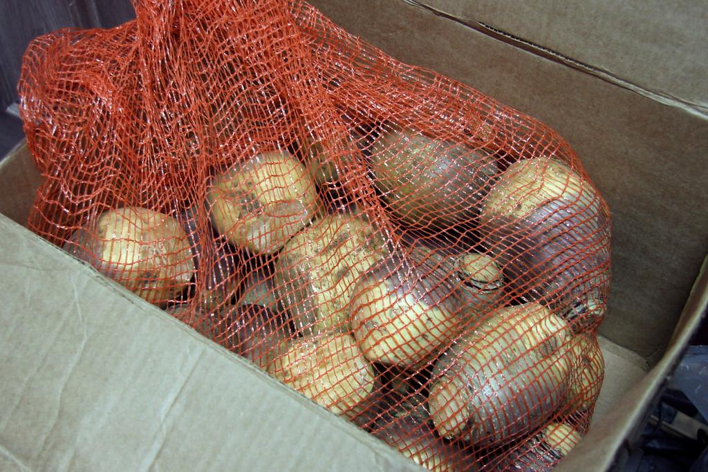 . Florida Mountain turnips. Nov. 12, 2013. Holly Pelczynski/Berkshire Eagle Staff