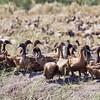 A free range duck farm