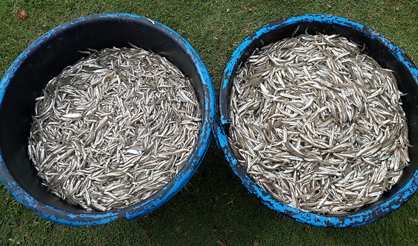 Sustainable fishing, Pasir Jambak beach, Padang City, West Sumatera, Indonesia
