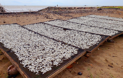 Sustainable fishing, Pasir Jambak beach, Padang City, West Sumatera, Indonesia