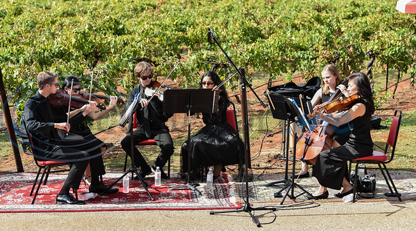 """A local orchestra plays the vines at Kiepersol Winery a lullaby to """"put them to sleep"""" during the winery's annual Vine Day event. The event took place on Saturday, October 19 and is meant to give thanks for a bountiful harvest. (Jessica T. Payne/Tyler Morning Telegraph)"""
