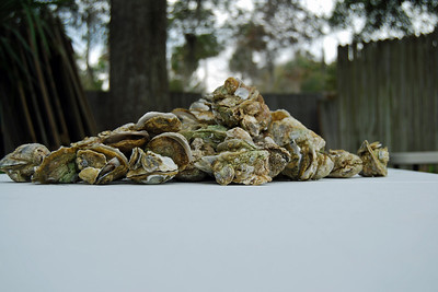 13 Mountain of Oysters at Chip and Donna Oyster Fest