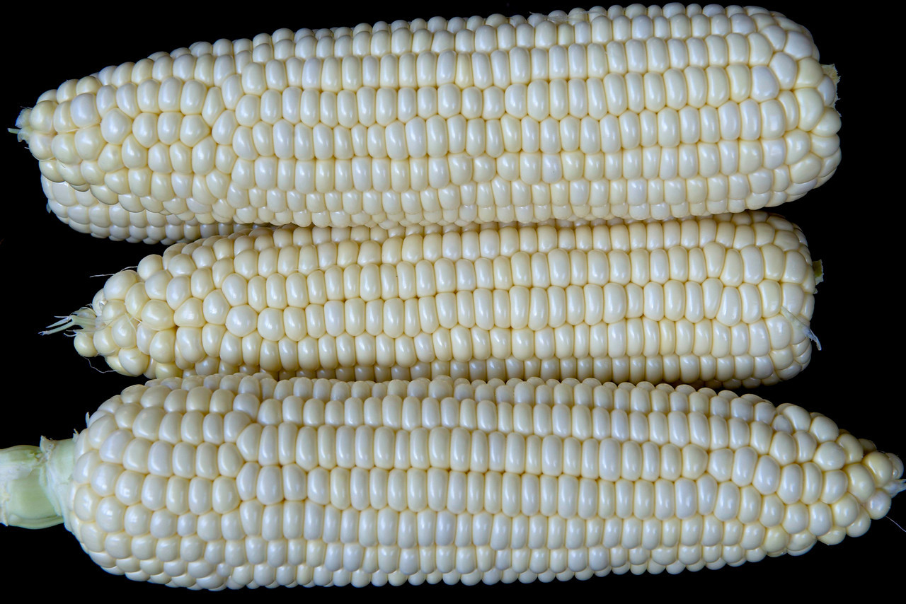 Fresh jersey corn!!!