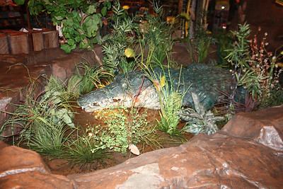 20100607 Rain Forest Cafe' - Wood field 011