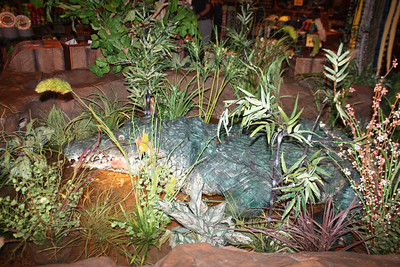20100607 Rain Forest Cafe' - Wood field 010