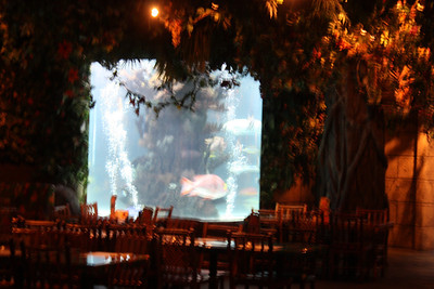 20100607 Rain Forest Cafe' - Wood field 047
