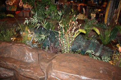 20100607 Rain Forest Cafe' - Wood field 009