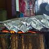 P1050535 fish copy2