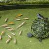 P1050531 fish copy2